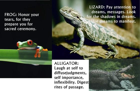 frog,lizard,alligator